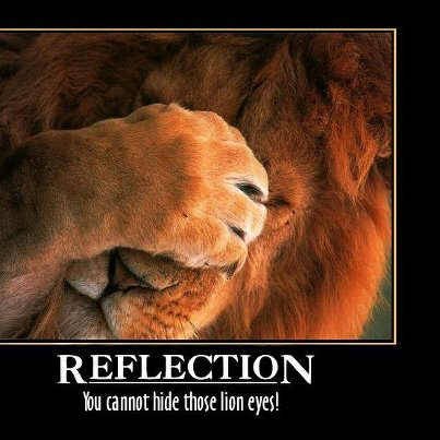You cant hide those lion eyes :)